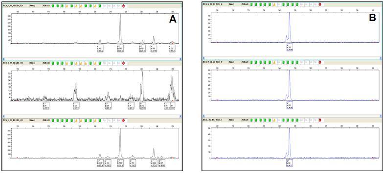 Snap shot showing A, Polymorphic (heterozygous) B, monomorphic (homozygous) allele.