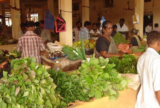 Availability of leafy vegetables (e.g. Amaranthus sp., Acalypha, Alternanthera, Murraya, etc.) at A, Batticaloa.