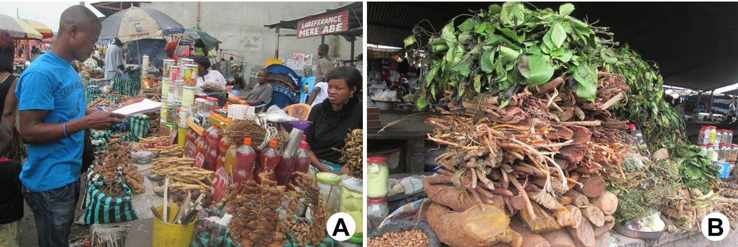 A, One of the authors (Clément Inkoto Liyongo) interviewing a medicinal plant vendor in a local market; B, Some medicinal plant species in the local marked