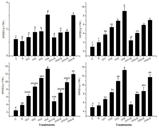 Mitigating effects of salicylic acid on antioxidant enzyme activities of UV-B stressed Pisum sativum L.