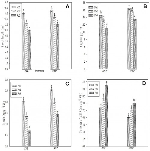 Effect of NO in seedlings of <em>Vigna radiata</em> under lead stress: <strong>A, </strong> Shoot length; <strong>B, </strong> Sugar; <strong>C, </strong>Protein; <strong>D, </strong> Lipid peroxidation.