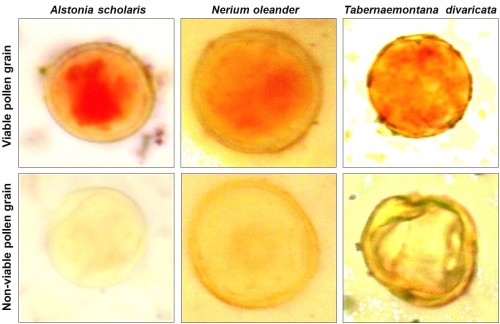 Viable and non-viable pollen grains of the plant species studied