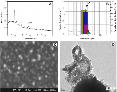 Characterization of synthesized CuO NPs (A) X-ray diffraction pattern of the synthesized CuO NPs (b) Particle size distribution image of the synthesized CuO NPs (C) SEM image of the synthesized CuO NPs (D) TEM image of the synthesized NPs.