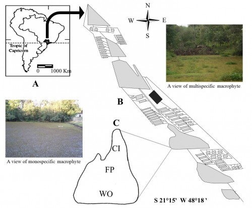 Diagram of<strong></strong> the fish pond studied. Inset A: shaded area indicates southeastern Brazil (the state of São Paulo). Inset B: aquaculture farm of the Univ. Estadual Paulista. Inset C: fishpond studied with sampling sites (CI, FP, and WO) and _-_- = frog culture sector.