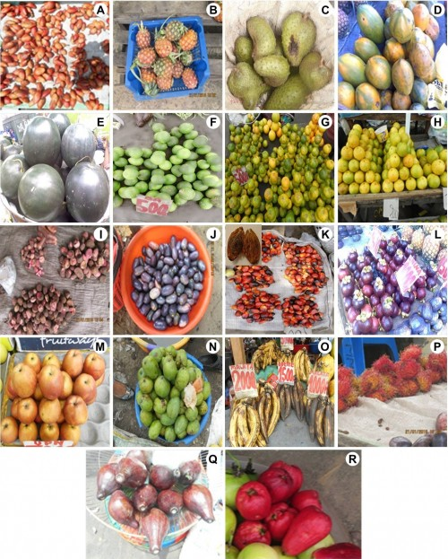 Some fruits found in four markets of Mont-Ngafula township, Kinshasa City.
