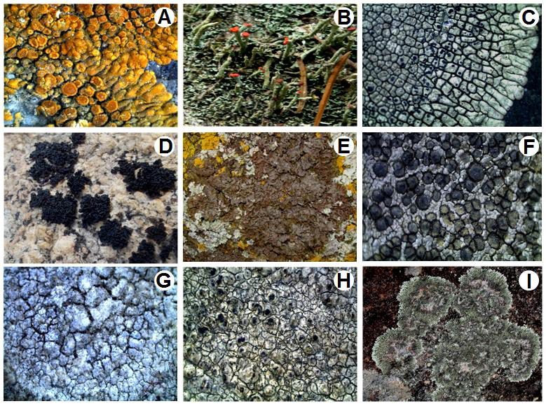 Additions to lichen flora of Jammu and Kashmir.