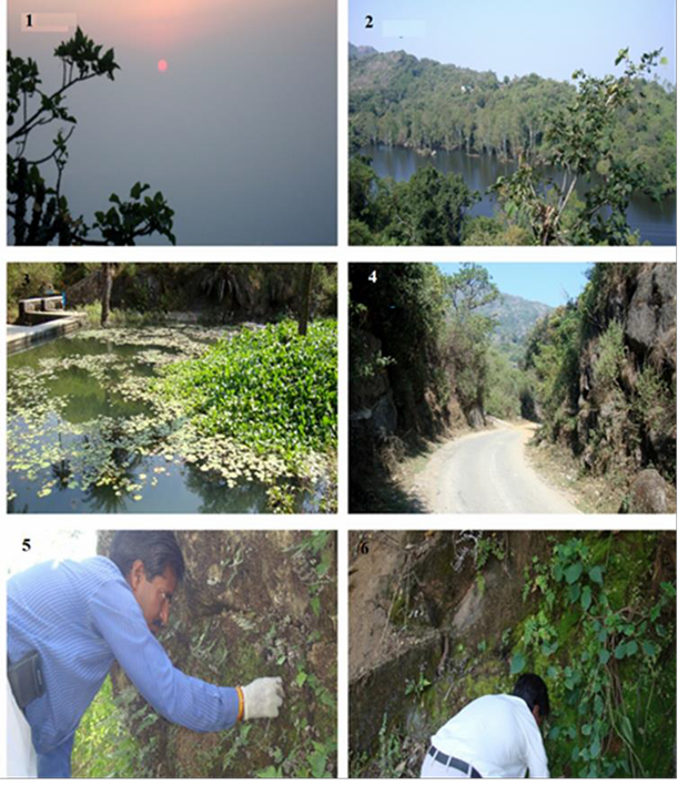 A–D, Different locations of Mount Abu (Rajasthan) at a glance; E–F, Collection of corticolous and terricolous mosses.
