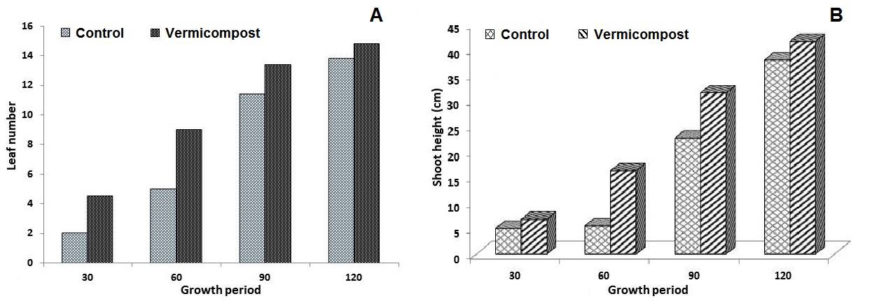 Effect of Vermicompost on Chilli: A, Leaf number; B, Shoot height.