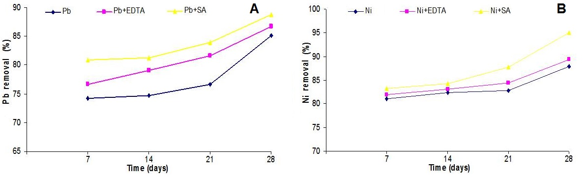 Removal potential of Lemna minor L. after different days: A, Pb; B, Ni.