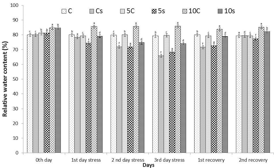 Effect of liquid phosphobacterium on relative water content of Abelmoschus esculentus (L.) Moench (Okra).